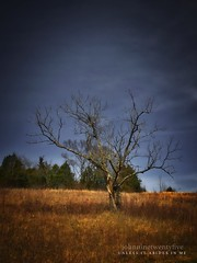 Unless It Abides In Me (Saved by Grace (100% God, 0% Me)) Tags: worship redemption truth genesis revelation counseling biblical bible forgiveness forgiven faith reformed theology culture church baptist christian hope love jesus christ god emmanuel holyspirit praise gospel hell heaven sovereign trust obey foundation israel world evangelism johnninetwentyfive sight light word goodnews counsel counselors lamb law commandment peace kingdom man sin hebrew suffering soulcare heart idolatry comfort temptation scripture lord grace mediator justification discipleship regeneration election holy mortification fellowship reconciliation jews seekinggod religion theparklandsoffloydsfork wisdomquotes biblicalcounseling