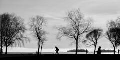 P1000518 (Samuli Koukku) Tags: trees sea bw tree monochrome weather silhouette finland blackwhite helsinki lauttasaari