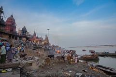 Manikarnika Ghat   Varanasi (elango1992) Tags: street travel india streetphotography varanasi elango uttarpradesh canon1635mm manikarnikaghat canon5dm3 april2016 wwwielangocom elangovansubramanianphotography contactielangocom