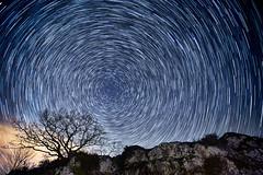 Lonely Oak under Stars (Anthony Gehin) Tags: blue winter sky rock night star oak trail polar vosges circumpolar