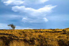 "peaceful lone tree under strange cloud, grass moor at Sands of Forvie Nature Reserve, Aberdeenshire, Scotland (grumpybaldprof) Tags: blue sea sky sun seascape colour tree texture beach grass clouds landscape scotland sand aberdeenshire patterns north perspective peaceful estuary moor grassland hdr newburgh lonetree lonelytree ""northsea"" ""sandsofforvienaturereserve"" ""ythanriver"""