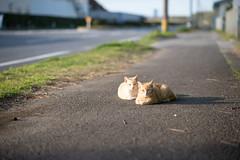 (23fumi) Tags: street cat nikon dof bokeh 85mm nikkor   d600 afs85mmf18g