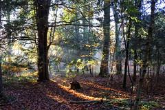 Sonnenstrahlen (blichb) Tags: de bayern deutschland herbst 2015 wessobrunn canon6d eibenwald eibenpfad paterzell blichb canonlensef35mm114lusm