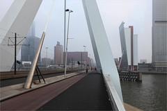 Rotterdam, Erasmusbrug (LichtEinfall) Tags: rotterdam erasmus erasmusbrug nieuwemaas wilhelminapier raperre img35123000