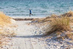 Beach runner (Hkan Dahlstrm) Tags: sea people beach photography se skne sand sweden cropped runner hllviken f40 2016 ef85mmf18usm skneln canoneos5dmarkii sek vellinges 6126032016161934