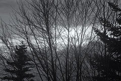 Nature's curtain for light (RKAMARI) Tags: autumn trees light bw fall nature monochrome fog forest nationalpark flickr cities zen heroes contemplative miksang bolu yedigller
