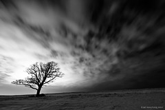 Dark Seduction... (mc_icedog) Tags: morning winter sky snow canada cold tree nature monochrome field clouds landscape outdoors movement long exposure winnipeg angle horizon tripod wide illumination manitoba mysterious land late serene tall mb luminous depth