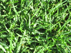Grass (Caroline-NZ) Tags: green texture nature grass design earth feel lawn shapes ground felt organic pure blades