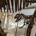 68 Royal Ontario Museum 10