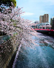Canal Afternoon (H.H. Mahal Alysheba) Tags: flower water japan zeiss river cherry landscape tokyo nikon cherryblossom sakura d800 distagon carlzeiss 28mmf2