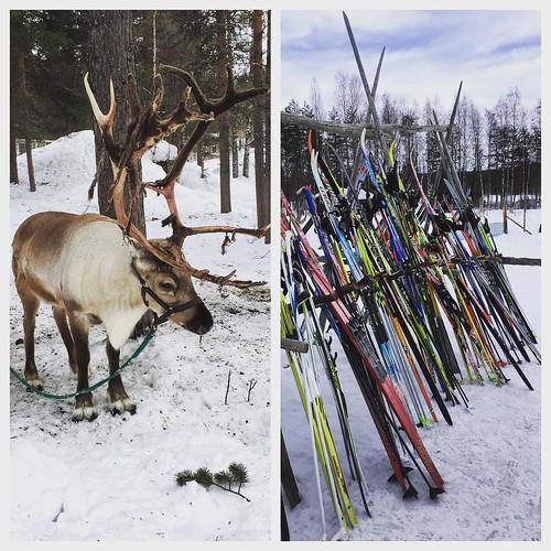 #pääsiäinen #easter #levi #lapland #holiday #pertsaa #plussakeli