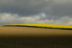 Contrastes (Valentin le luron) Tags: nature jaune de nikon suisse lausanne e yves nuage paysage 800 champ gros ligne vaud abstrait colza graphique romandie echallens paudex oulens 20160429