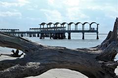 Driftwood Beach (paulaliimatta) Tags: beach georgia driftwood jekyllisland