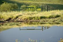 Vernal Pond (jeffmgrandy) Tags: reflection landscape pond hiking hills vernal livermore altamont brushy
