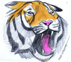 tigre a lapicero (ivanutrera) Tags: wild animal sketch drawing wildlife tiger draw dibujo tigre boligrafo dibujoalapicero dibujoenboligrafo