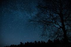 DSC_9362 (Stle Meyer) Tags: longexposure tree norway night dark stars star norge nikon nightscape nightshot nightsky akershus milkyway hurdal eidsvoll