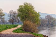 Morgens an der Donau (Fotos4RR) Tags: morning river linz austria sterreich spring fluss morgen danube obersterreich frhling donau upperaustria