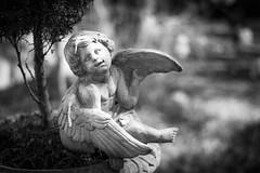 (105/366) Cherub (CarusoPhoto) Tags: bw statue angel project john 50mm prime photo illinois wings day pentax lawn wing il cherub suburb 365 f18 caruso smc frankfort ks2 366 pentaxda carusophoto smcpentaxda50mmf18