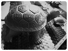 turtleinkwell (LauraSorrells) Tags: stilllife home this turtle object altar gift creature inkwell 2010 thecove
