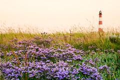 Lighthouse Westerhever (PHOTOPHOB) Tags: landscape lumix panasonic g6 landschaft nordsee westerhever dmcg6
