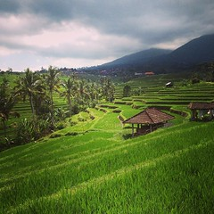 #indonesia #jatiluwih #rice #terrace #green @explorebali (djulinho) Tags: green indonesia rice terrace jatiluwih uploaded:by=flickstagram explorebali instagram:venuename=jatiluwihriceterrace2ctabananbali instagram:venue=261614570 instagram:photo=80634410886797900716134992