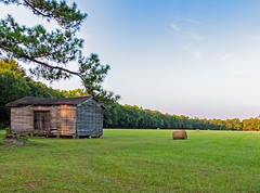 hay field and shed (doddsjzi) Tags: field shed hay hayfield bales balesofhay ravenelsc weatheredshed