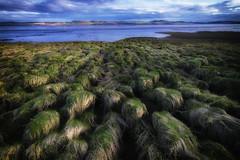 Army of bushes (haqiqimeraat) Tags: light seascape art nature composition landscape scotland nikon scenery colours wide scenic tokina tay serene colourful ultrawide d7100