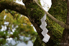 20160409-37-Shinto paper shide (Roger T Wong) Tags: travel mountain holiday japan paper shinto zigzag wha 2016 shide kumanokodo worldheritagearea nachisan kumanonachi canonef70200mmf4lisusm canon70200f4lis grandshrine kiipeninsula canoneos6d rogertwong
