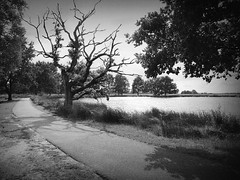 Still holding on (andzwe) Tags: trees light shadow summer blackandwhite sun lake tree water netherlands monochrome dutch landscape death path nederland boom single zomer lonely dying zon dood drenthe solitaire solitair stillholdingon panasonicdmcgh4 opstervennadood