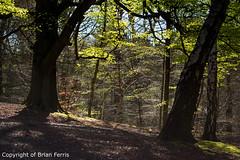 IMGP1081 (acornuser) Tags: park trees blackandwhite bw reflection water woodland garden landscape waterfall spring surrey cascade virginiawater blosom sigma1770 pentaxk3