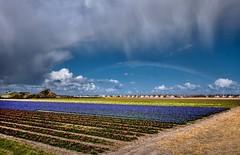 20160417-1704-56 (Don Oppedijk) Tags: flowers rainbow julianadorp