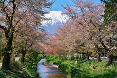 This is JAPAN (mon_masa) Tags: mountain nature japan river landscape countryside scenery fuji mountfuji fujisan cherryblossoms cherrytree mtfuji fujiyama