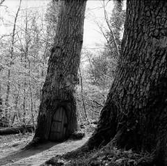 Nobody in (Johnbasil1) Tags: door trees light shadow film mediumformat dark woods delta 400 imagine mystical analogue stories ilford yashica635