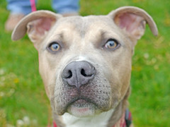 Romeo_02 (AbbyB.) Tags: rescue dog pet newjersey canine shelter adopt shelterpet petphotography easthanovernj mtpleasantanimalshelter