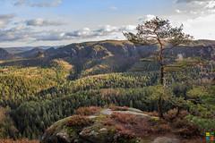 Bergfest (FotoCaching) Tags: cloud tree nature berg landscape schweiz hiking hill natur wolken landschaft baum mothernature wandern schsische drausen