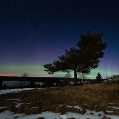 Green nights (PixPep) Tags: winter snow tree ice stars auroraborealis arvika thenorthernlights slje pixpep