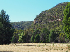 Bertha's Gully (Kaptain Kobold) Tags: trees nature landscape nationalpark scenery australia nsw gully kaptainkobold weddinmountains