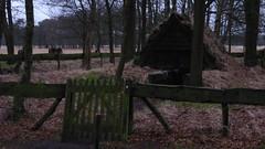 Shepherds cottage, Delleboersterheide, Fryslan (Alta alatis patent) Tags: sheep cottage sheperd nijeberkoop delleboersterheide