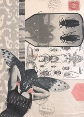 Moth Damage (kurberry) Tags: collage cutandpaste collagecollaboration vintageephemera
