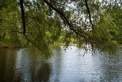Serednikovo. Barskiy pound (akk_rus) Tags: water pond nikon europe russia nikkor   moscowregion d80 serednikovo 18135mm   nikond80 18135mmf3556g afsnikkor18135mm13556ged   barskiypound