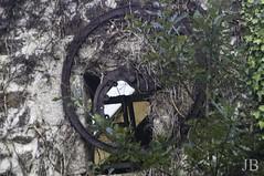 PLOUGUIN  -00032 (Jeannette201) Tags: moulin bretagne quoi finistere plouguin locmajan