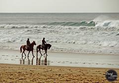 (dpsantos) Tags: ocean sea horses praia beach mar cavalos