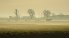 fading fog (bugman11) Tags: trees winter fog landscape nederland thenetherlands thegalaxy platinumheartaward simplysuperb infinitexposure