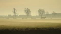 fading fog (bugman11) Tags: trees winter fog landscape nederland thenetherlands thegalaxy platinumheartaward simplysuperb infinitexposure