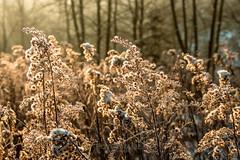 Frost in der Morgensonne (moor.andre) Tags: winter nature canon photography photo frost foto fotografie natur nrw kalt sonne hagen sonnenaufgang morgen emst gutenmorgen eos700d andremoor fotomoor