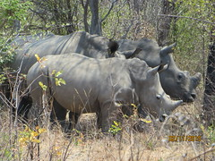 Zimbabwe (198) (Absolute Africa 17/09/2015 Overlanding Tour) Tags: africa2015