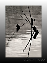 Sticks (Paul.Y-D) Tags: bw lake abstract water mono sticks pond