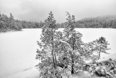Unspoiled (Ray Palmer Photography) Tags: trees winter cloud lake snow ny storm ice water landscape pond woods adirondacks adk snowscape unspoiled landscapephotography raypalmer owenpond trackless