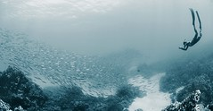 IMG_3990 (Andrey Narchuk) Tags: blue swim underwater dahab redsea dive free tone apnoe freediver