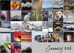 January 2016 mosaic (keepps) Tags: mosaic month bighugelabs